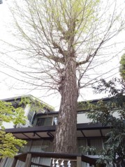 M.Rosemary 公式ブログ/縁結びの樹 画像1