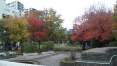 M.Rosemary 公式ブログ/都会の紅葉 画像1