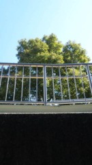 M.Rosemary 公式ブログ/緑の光 画像1