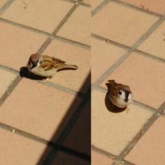 M.Rosemary 公式ブログ/ちゅんこが2羽、私の目を見て、ごはんねだり。 画像1