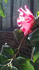 M.Rosemary ��֥?/�����ܤκҳ� ����1