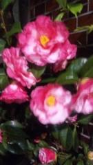M.Rosemary 公式ブログ/桜ですっかり影が薄いですが。 画像1