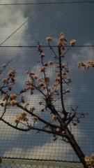 M.Rosemary 公式ブログ/八重の早咲きの桜 画像1