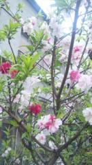 M.Rosemary 公式ブログ/ひとつの株に 画像1