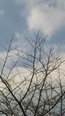 M.Rosemary 公式ブログ/今年の桜は 画像1