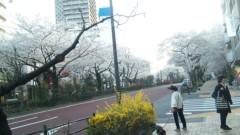 M.Rosemary 公式ブログ/茗荷谷の桜 画像1