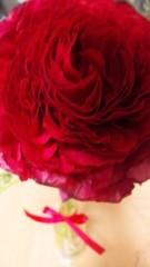 M.Rosemary 公式ブログ/お誕生日にいただいたお花 画像1