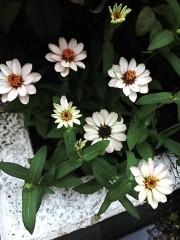 M.Rosemary 公式ブログ/昭和を築き支えた人たちが次々と 画像2