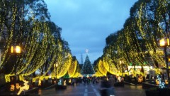 M.Rosemary 公式ブログ/クリスマス飾り 画像1