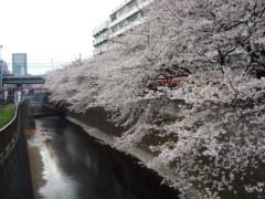 鬼塚忠 公式ブログ/年金と桜。 画像1