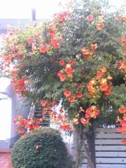 鬼塚忠 公式ブログ/私が好きな花は・・・。 画像1