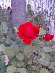 鬼塚忠 公式ブログ/家の前を、子供が庭を見ながら通る! 画像1