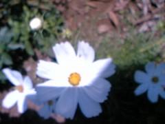 鬼塚忠 公式ブログ/花を植えました。 画像1