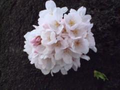鬼塚忠 公式ブログ/年金と桜。 画像2