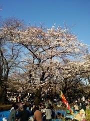 庄子知美 公式ブログ/桜咲く♪ 画像1