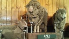 庄子知美 公式ブログ/あけましておメェーでとうございます 画像1