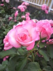 西嶋大樹 公式ブログ/バラのある街 画像1