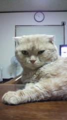 西嶋大樹 公式ブログ/親戚の家の猫は 画像1