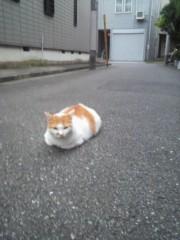 西嶋大樹 公式ブログ/猫は一声にゃーと鳴く 画像1