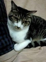 下村奈緒子 公式ブログ/ネコにコロコロをかけてみました(笑) 画像1