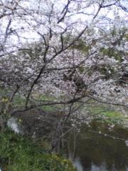 下村奈緒子 公式ブログ/桜 画像1