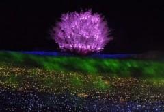 石川恵深 公式ブログ/三重県☆なばなの里へ 画像3