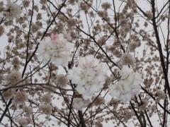 石川恵深 公式ブログ/今日はオーディション 画像2