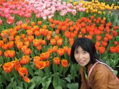 石川恵深 公式ブログ/おはよ〜♪オランダチューリップ 画像1