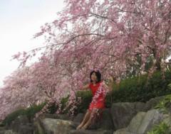 石川恵深 公式ブログ/しだれ桜&たんぽぽ 画像1