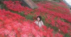 石川恵深 公式ブログ/ごんぎつねの彼岸花 (愛知県半田市) 画像1