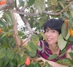 石川恵深 公式ブログ/恵深チャンちの柿 画像2