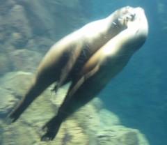 石川恵深 公式ブログ/大阪・海遊館☆恵深の激写 画像2