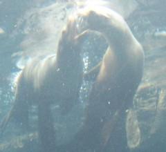 石川恵深 公式ブログ/大阪・海遊館☆恵深の激写 画像1