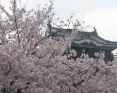石川恵深 公式ブログ/こちら桜満開(岡崎城のある公園)&エミコメ!(^^)! 画像1