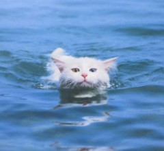 石川恵深 公式ブログ/猫かき!? 画像3