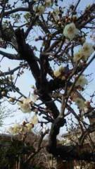 市川勝也 公式ブログ/梅の花。 画像1
