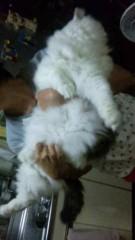 市川勝也 公式ブログ/猫。 画像2