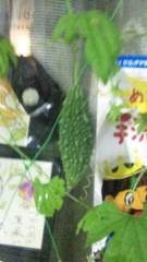 市川勝也 公式ブログ/ゴーヤで緑のカーテン 画像1