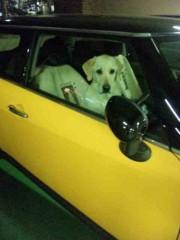 市川勝也 公式ブログ/犬。 画像1