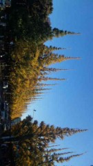 市川勝也 公式ブログ/神宮外苑・イチョウ並木。 画像2