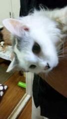 市川勝也 公式ブログ/猫。 画像1