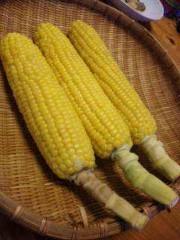 市川勝也 公式ブログ/夏野菜をまたまた・ 画像1