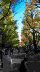 市川勝也 公式ブログ/神宮外苑・イチョウ並木。 画像1