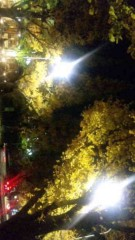 市川勝也 公式ブログ/神宮外苑・イチョウ並木。 画像3