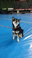 市川勝也 公式ブログ/犬! 画像2