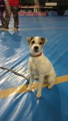 市川勝也 公式ブログ/犬! 画像1