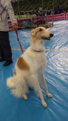 市川勝也 公式ブログ/犬!2。 画像1
