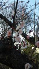 市川勝也 公式ブログ/春? 画像1