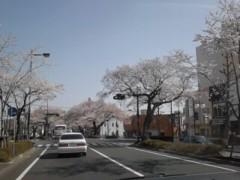 竹内英樹 公式ブログ/昨日の桜 画像2