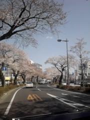 竹内英樹 公式ブログ/昨日の桜 画像1